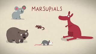 Три способа рождения у млекопитающих! Kate Laboski #TED-Ed | TED Ed на русском