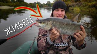 ТРОФЕЙНЫЙ СОМ и ЖЕРЕХ на ДЕСНЕ Осенняя рыбалка
