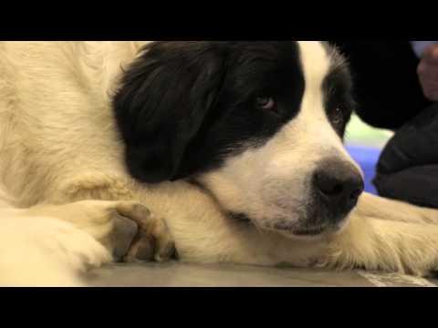 Prague Expo Dog 2015 - videoreport od Máme rádi psy