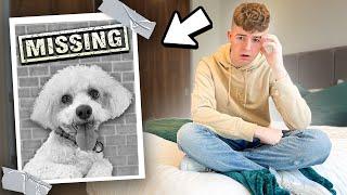 my dog went missing...