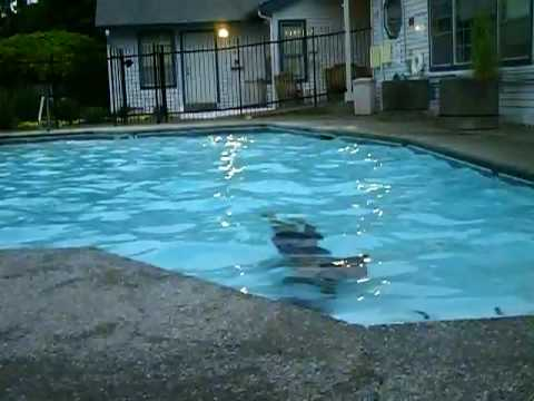 Anaconda in the pool heheh youtube for Pool show qld