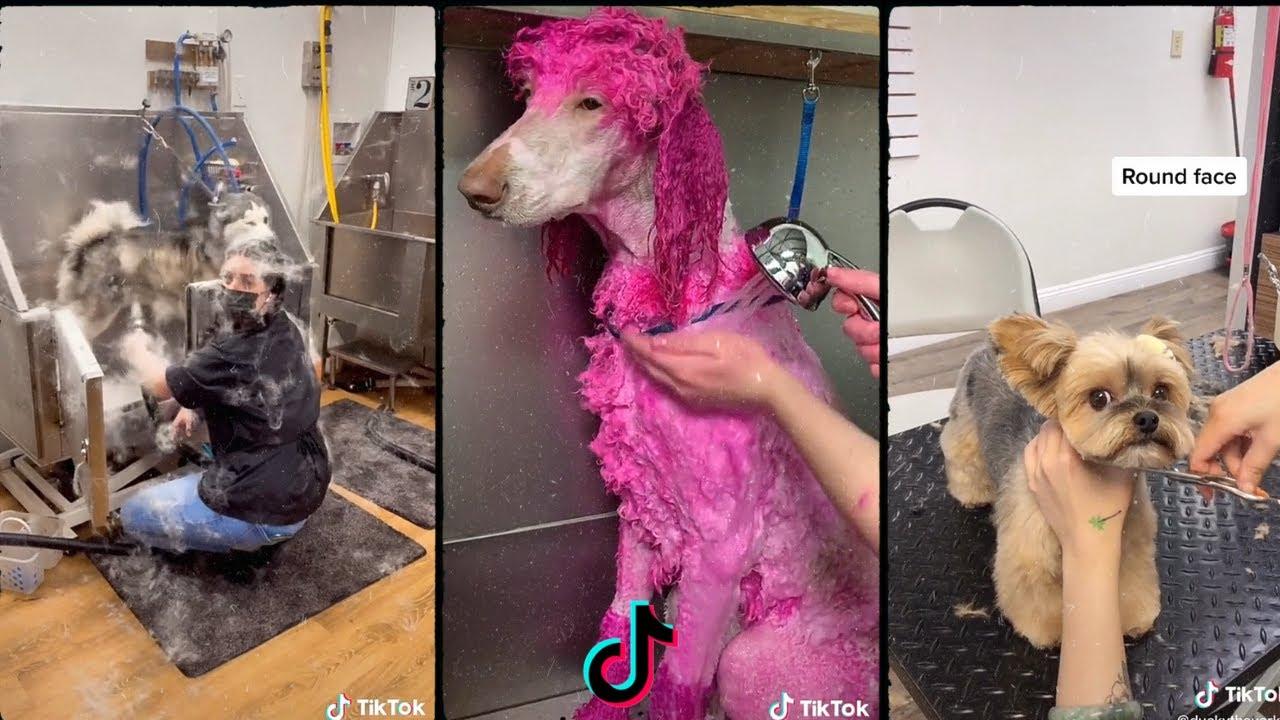 Download Dog grooming tiktok compilation 🐶🐶