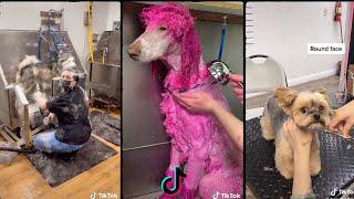 Dog grooming tiktok compilation