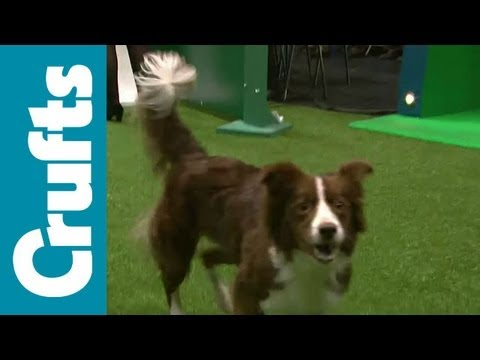 Agility - Singles Heat - Small, Medium and Large - Crufts 2012