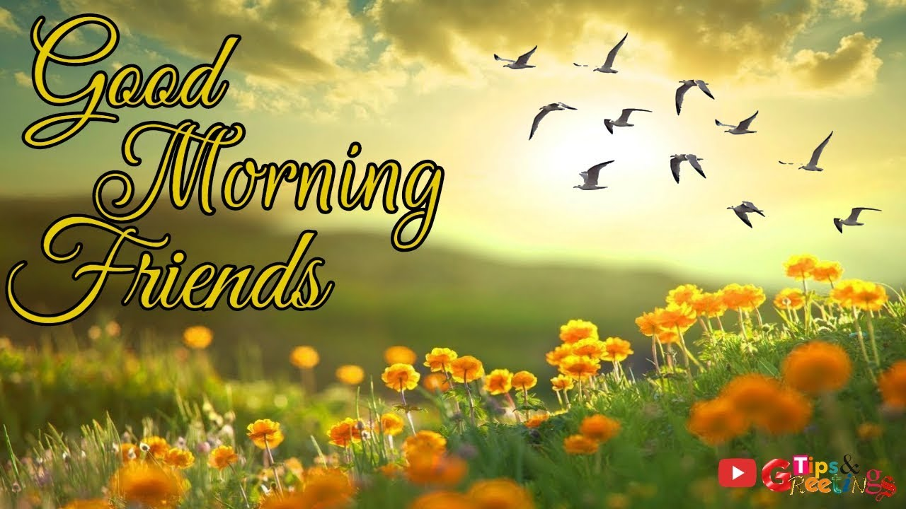 Good Morning Friends Good Morning Quotes Whatsapp Video Youtube