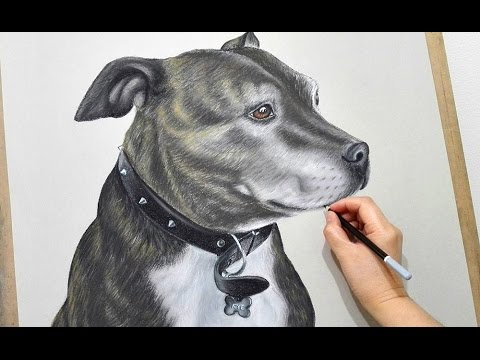 Staffordshire Bull Terrier Show Dogs