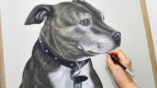 Drawing realistic dog portrait - Staffordshire bull terrier - Time lapse