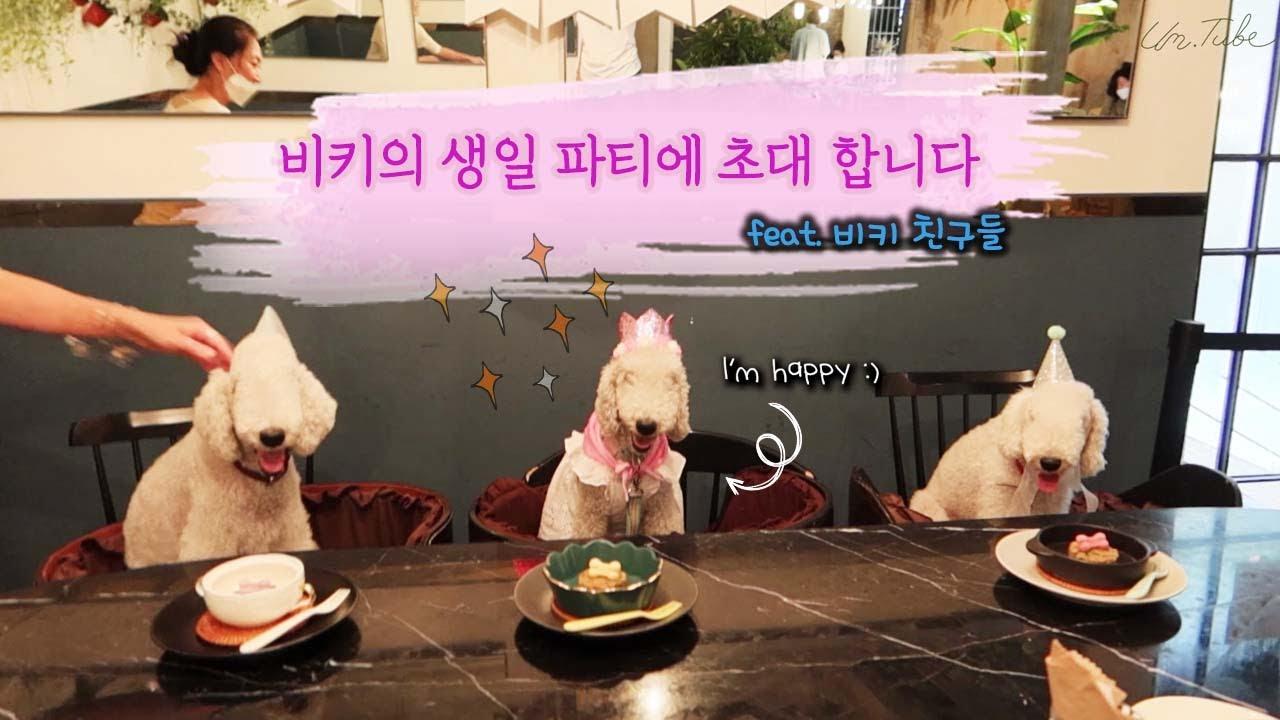 (ENG) 배우 엄지원의 온앤오프 브이로그   day off vlog   비키 생일 파티