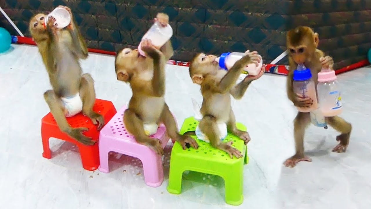 Donnal Molly & Zuji Queuing-Up On Chair Drink Milk Very Delicious, Zuji Carrying Two Bottle Milk