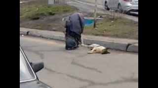 УЖАСЫ Видео как бабка тянет мёртвую собаку