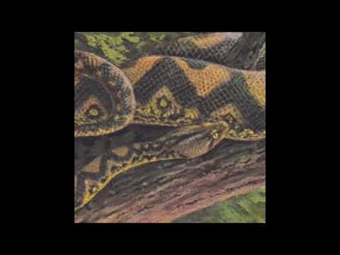 Rainforest Spiritual Enslavement - Jungle Is a Shapeshifter with Silent Servant [HOS-498]
