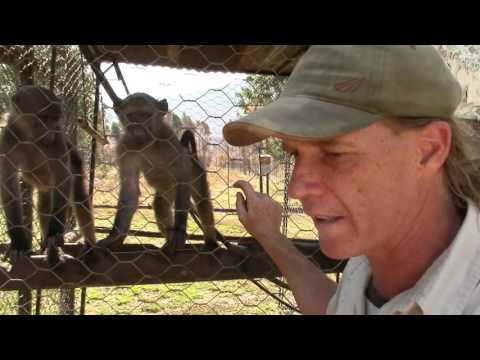 UBUNTU Farm South Africa - Volunteer Program