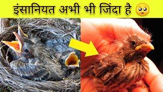 अभी भी इंसानियत  जिंदा है 🥺 / Man Rescues a Baby Parrot #shorts
