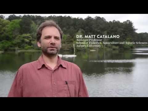 Fisheries Faculty Spotlight: Matt Catalano