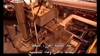 صناعة البطاطا المجمدة للقلي