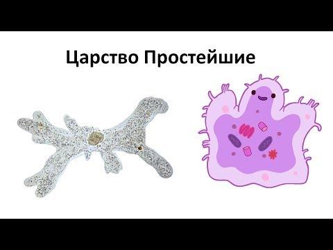 3. Простейшие (7 класс) - биология, подготовка к ЕГЭ и ОГЭ 2018