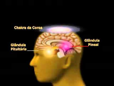 Glandulas Pituitaria e Pineal - YouTube