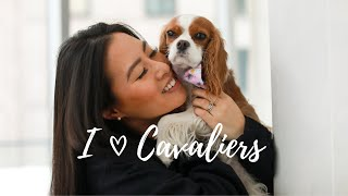 5 REASONS WHY CAVALIERS ARE GREAT FOR FIRST TIME DOG OWNERS