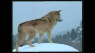 Native American Chants- Chant 2-Wolves-