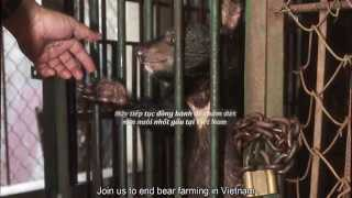Ending Bear Farming in Vietnam - 10 years of Progress