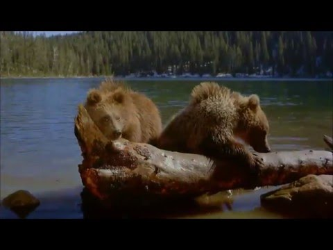 Native American Style Flute Music  -  Brown Bear