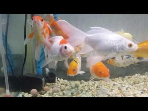 Xử lý nước cá kiểng