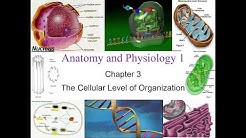 Chapter 3 The Cellular Level of Organization