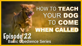 How to Teach Your Dog to Come When Called. Episode 22