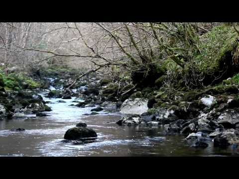 3D NATURE-Tranquil Music Of Nature Sounds-Dawn Chorus-Bird Song-Calming Ambient Water Flowing Sound
