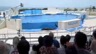 Delfin Intenta Escapar de Cautiverio en Delfinario de Japón