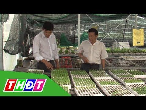 Nuôi cấy mô: Hướng đi cho nông nghiệp công nghệ cao |  Khoa học và Công nghệ | THDT