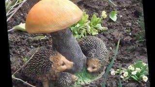 видео Как украсить сад и огород своими руками