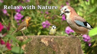 Birds and Bird Sounds Relaxation Extravaganza ⭐ Relax with Nature  8 Hours NEW ⭐