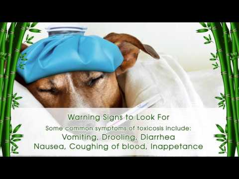 Protect Your Pet from Poisoning Poison Control Tips from IAH