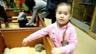Смотреть видео Видео для детей. Куда сходить в Москве. Наш поход в контактный зоопарк. Москва для детей. онлайн