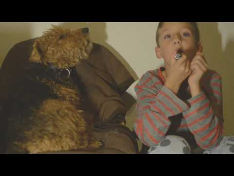 Welsh Terrier Howling Singing with my Son Funny