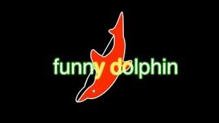 funny dolphin