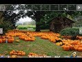 Save The Pumpkin Man Walkthrough [Games2Rule]