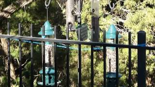 Wild Birds Feeding (spring)