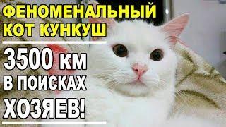 Кот Кункуш (Kunkush) преодолел полмира, чтобы найти потерянных хозяев