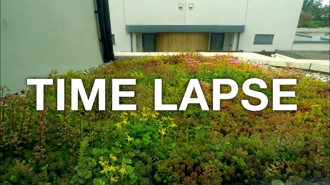 DIY Sedum Green Roof. Build + Growth 2 Month TIME LAPSE