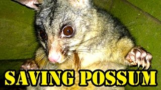 Saving Possum