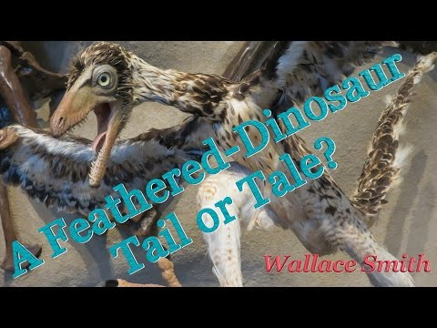 TW Webcast:  A Feathered-Dinosaur Tail or Tale?