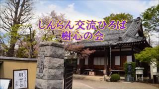 東京都世田谷区・真宗大谷派・存明寺・「樹心の会」のご案内