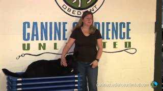 Maryland Dog Training  Testimonial   Jane And Baci
