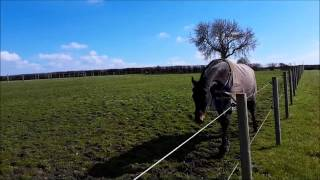 **update** rehab horse with air under skin - 7 weeks after sergery Video