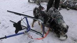 kanukassel-TV: Der ACTION-Rollator KICKSPARK mit Turbo-DOG-Antrieb ist wieder am Start