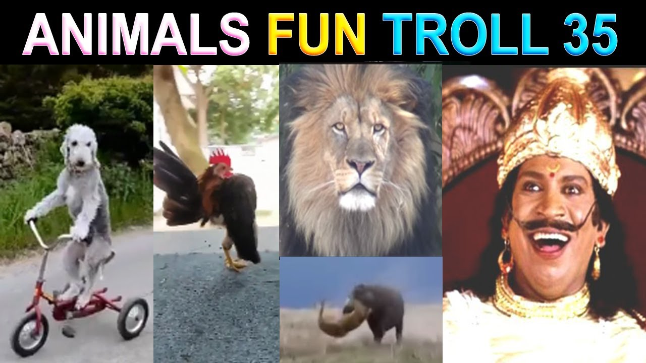 ANIMALS FUNNY VIDEO TAMIL TROLL PART 35 - NK TAMIL CHANNEL