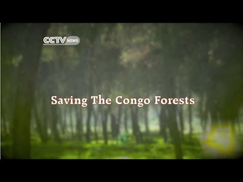CCTV: Faces Of Africa - Saving Congo Forests