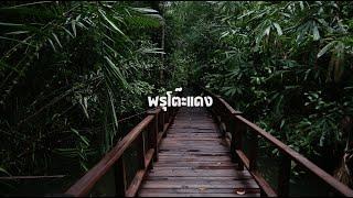 ป่าพรุโต๊ะแดง - ทีม Yawee Production [Peatswamps Youth Challenge]